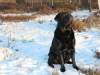 henk-und-kenny-in-wintermoor-januar12-071-small