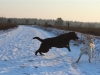 henk-und-kenny-in-wintermoor-januar12-080-small