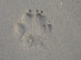 Pfote im Sand...