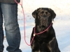 hundetraining-februar-2012-006-small