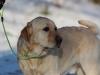 hundetraining-februar-2012-016-small
