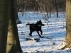 hundetraining-februar-2012-063-small