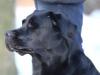 hundetraining-februar-2012-083-small
