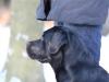 hundetraining-februar-2012-084-small