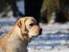hundetraining-februar-2012-097-small