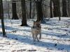 hundetraining-februar-2012-114-small