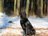hundetraining-februar-2012-127-small
