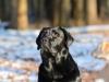 hundetraining-februar-2012-135-small