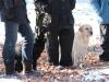 hundetraining-februar-2012-173-small