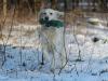hundetraining-februar-2012-215-small