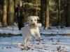 hundetraining-februar-2012-229-small