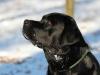 hundetraining-februar-2012-237-small