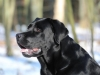 hundetraining-februar-2012-246-small