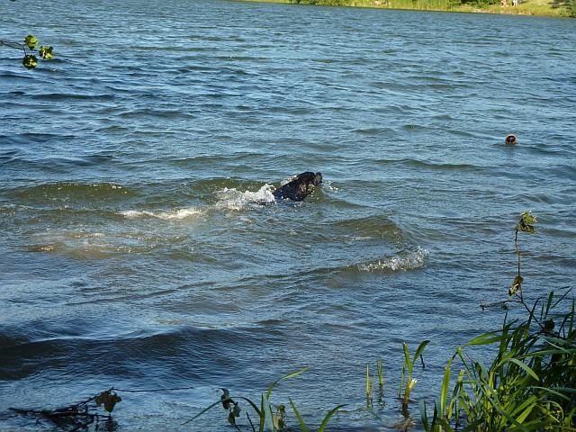 Henk schwimmt